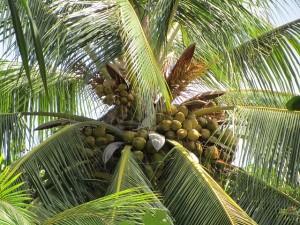 palm-388120_640