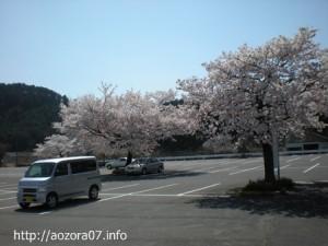 薄墨桜駐車場