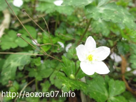散歩の花3